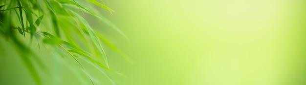 Close-up van het groene blad van het aardbamboe op vage groenachtergrond