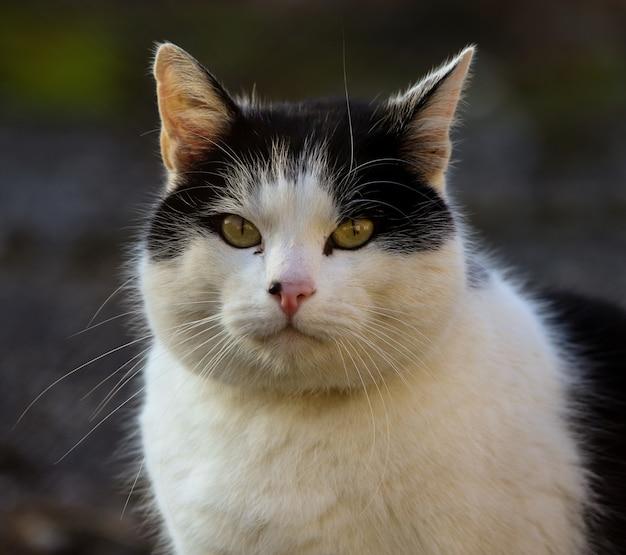 Close-up van het hoofd van een witte kat met zwarte vlekken en gele ogen.