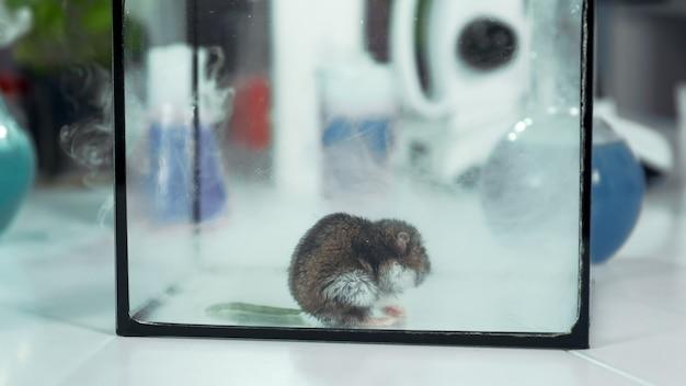 Close-up van het tegenkomen van rook uit kolf in een glazen container met muis