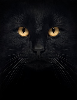Close-up van het zwarte kijken van de kat