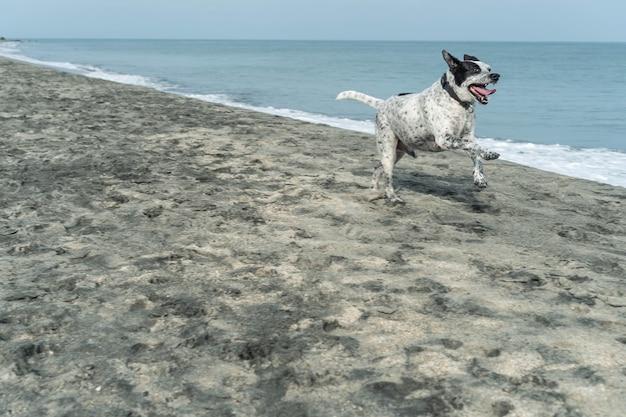Close-up van hond die op het strand rent