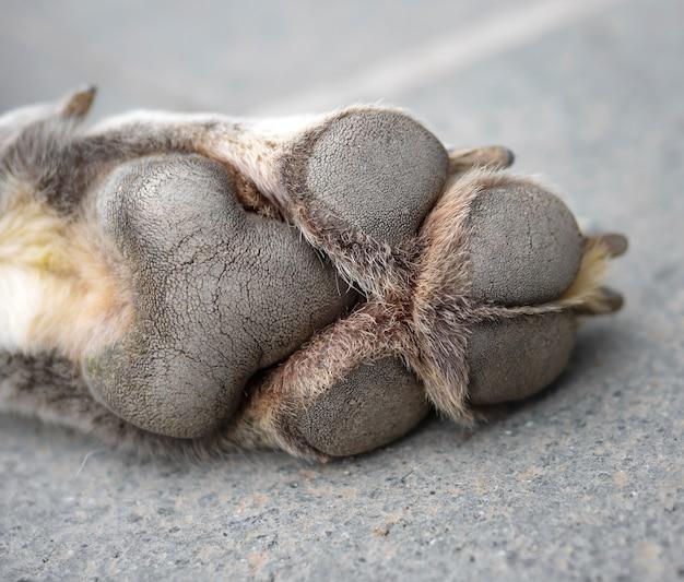 Close up van hondenpoot