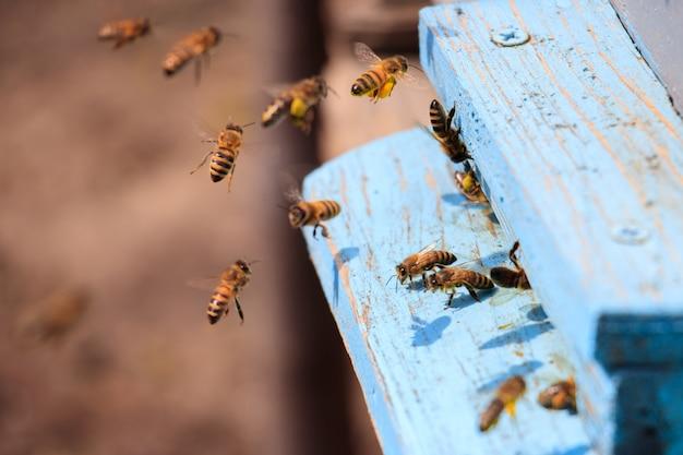 Close-up van honingbijen vliegen op een blauw geschilderde houten oppervlak onder het zonlicht overdag