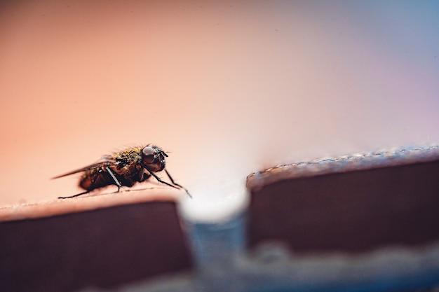 Close-up van huisvlieg die op een oppervlak rust