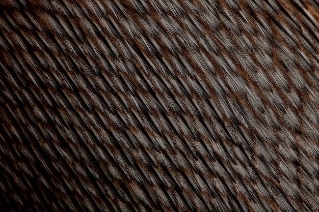 Close-up van humboldt-pinguïnveren, spheniscus-humboldti