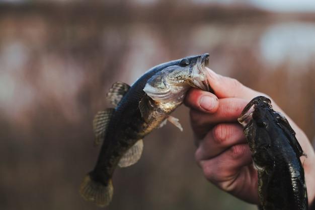 Close-up van iemands hand met vis