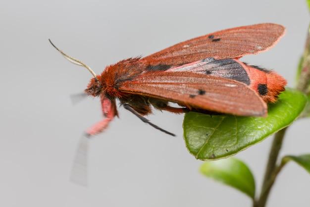 Close-up van insect met kleurrijke vleugels