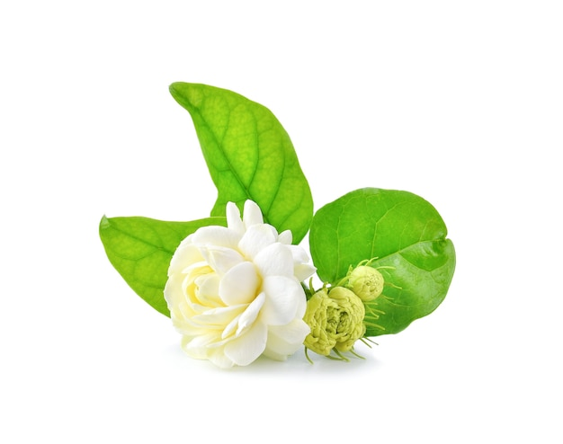 Close-up van jasmijnbloemen