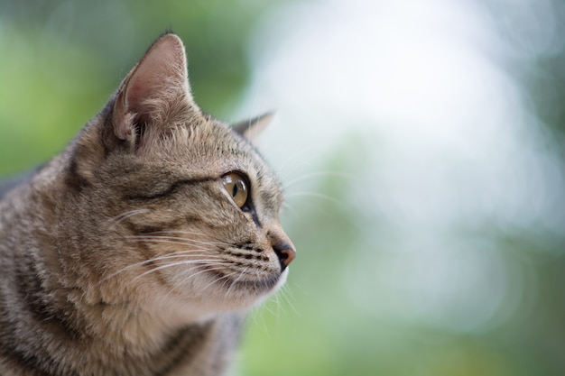 Close-up van kat