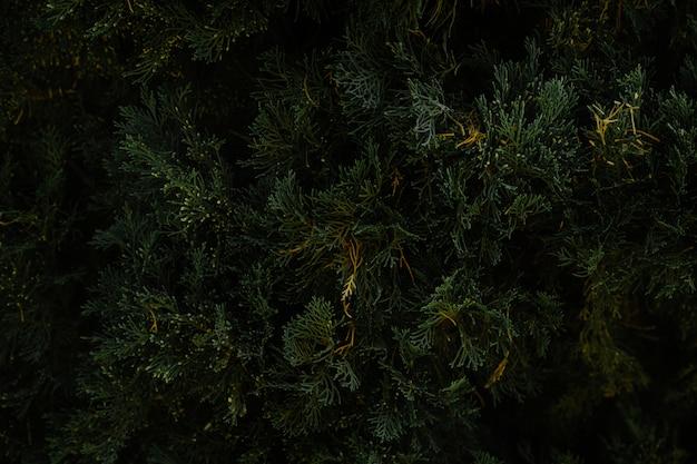 Close-up van kerstboom bladeren