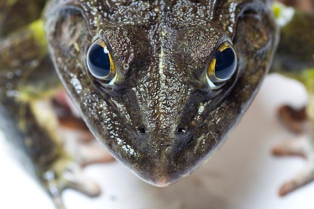 Close up van kikker