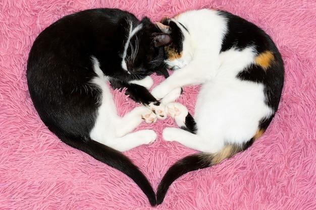 Close-up van kittens in de vorm van een hart
