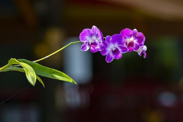 Close-up van kleine paarse bloem