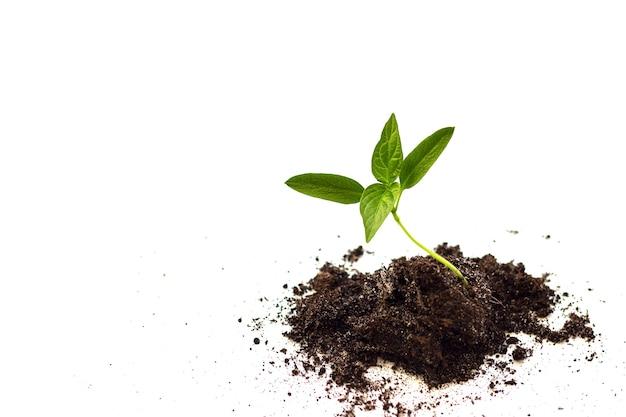 Close-up van kleine plant groeit. het concept van milieubeheer en wereldmilieudag.