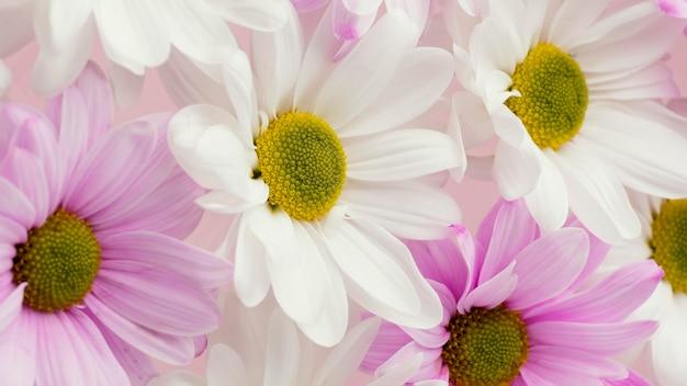 Close-up van kleurrijke de lentemadeliefjes