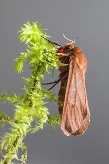 Close-up van kleurrijke gevleugelde insecten