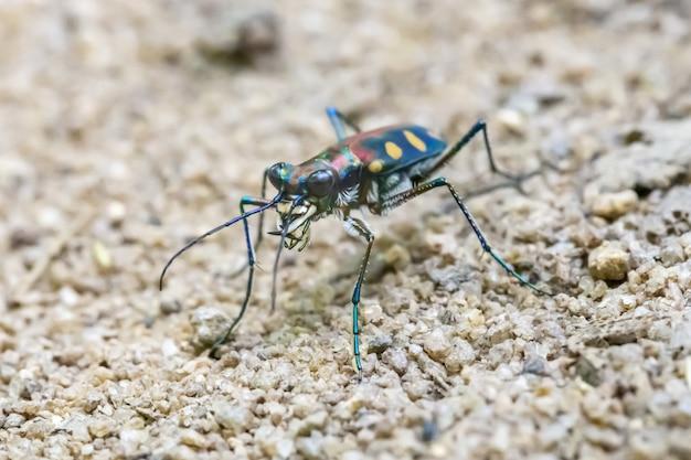 Close-up van kleurrijke insecten met lange benen