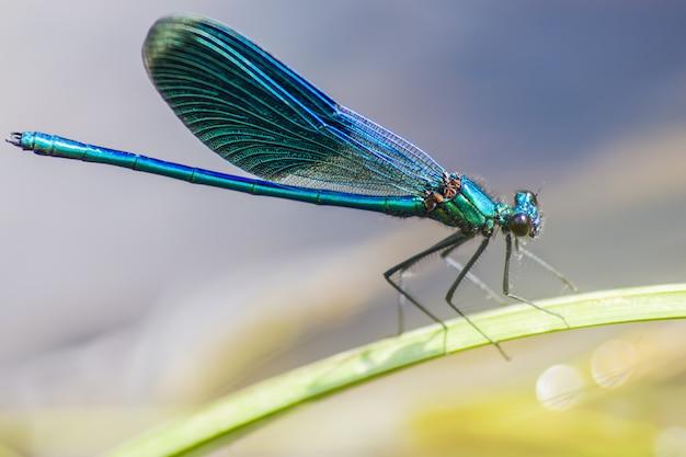Close-up van kleurrijke insecten op plant
