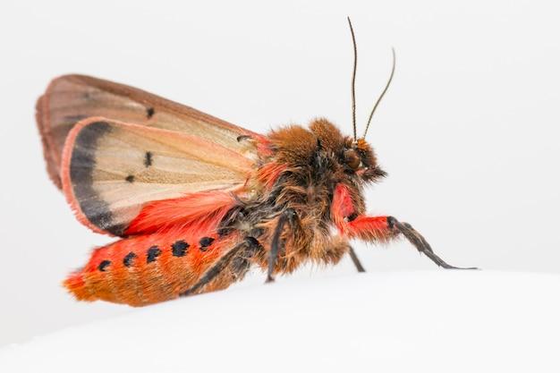 Close-up van kleurrijke insecten