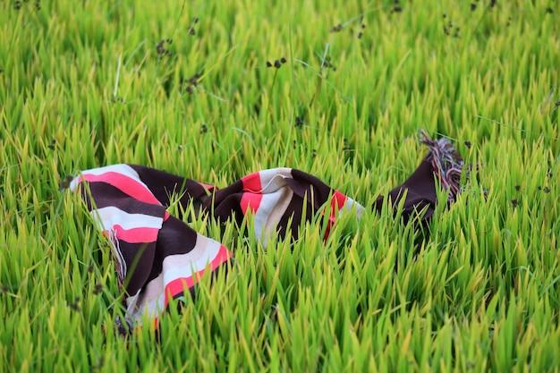 Close-up van kleurrijke korst van boer op rijstveld