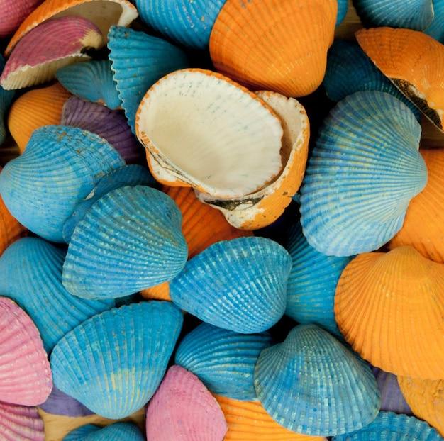 Close-up van kleurrijke zeeschelpen in verschillende vormen.