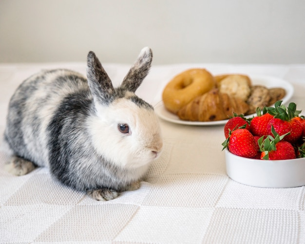 Close-up van konijn dichtbij verse aardbeien