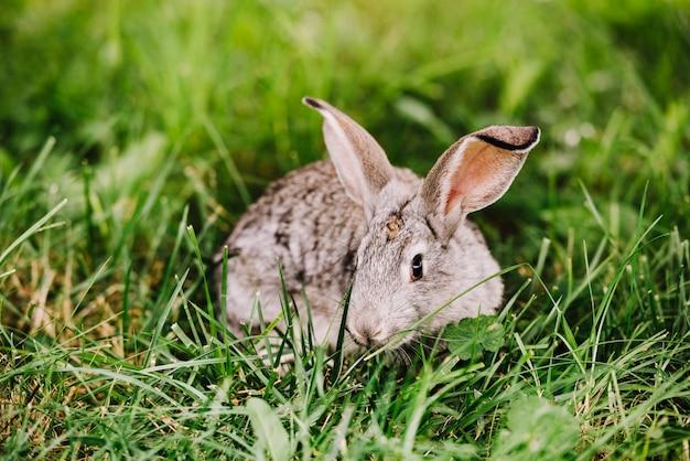 Close-up van konijn die op groen gras liggen
