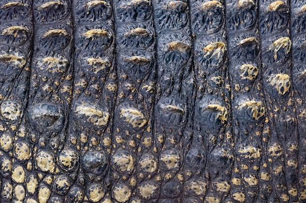 Close-up van krokodillenleer achtergrondstructuur