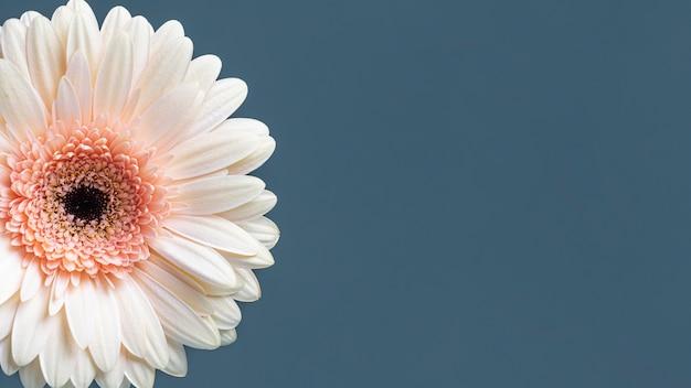 Close-up van macro bloeide bloem