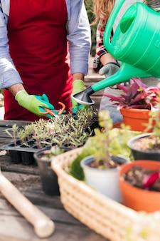 Close-up van mannelijke en vrouwelijke tuinman die en de installatie in de binnenlandse tuin in orde maken water geven
