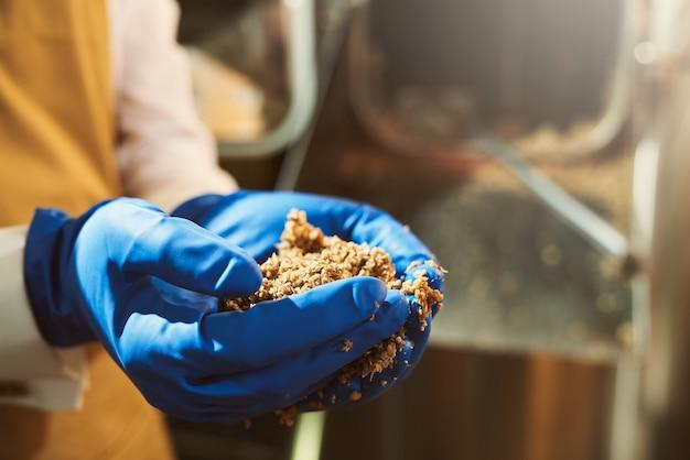 Close-up van mannelijke handen in blauwe rubberen handschoenen met gemalen moutkorrels. brouwerijspecialist volgt brouwerijproces met fragmentatie van mout.