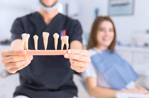 Close-up van mannelijke tandarts die tandenmodel toont