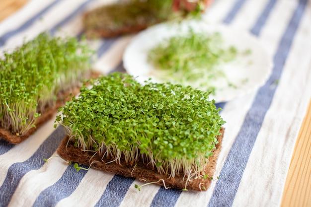 Close-up van microgreens van mosterdrucola en andere planten thuis