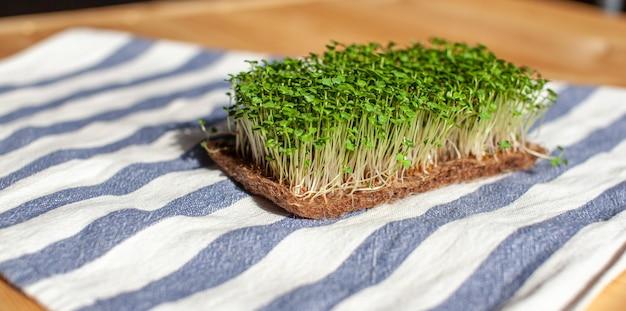 Close-up van microgroenten van mosterd, rucola en andere planten thuis. groeiende mosterd en rucola spruiten in close-up thuis. het concept van veganistisch en gezond eten. gekiemde zaden, microgreens