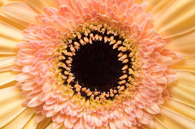 Close-up van mooie bloem