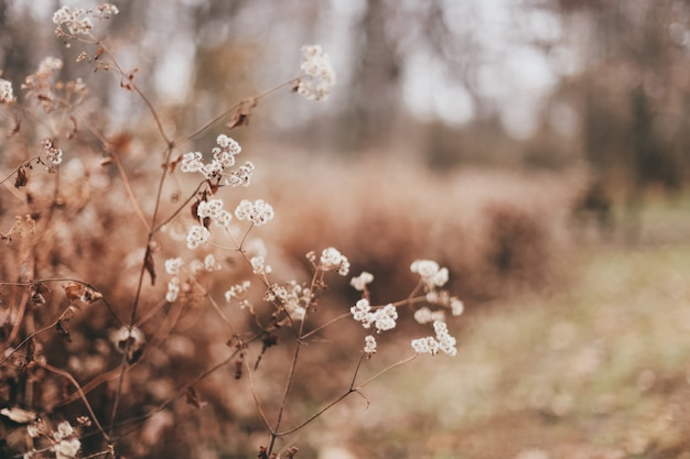 Close-up van mooie droge bladeren en planten in een bos