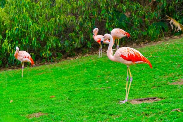 Close-up van mooie flamingogroep die zich op het gras in het park bevinden