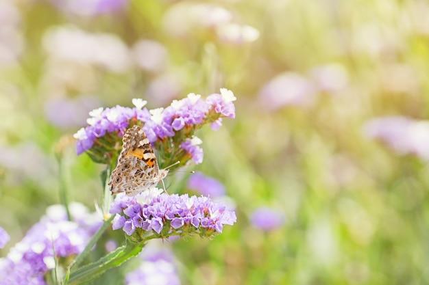 Close-up van mooie vlinder of met gesloten vleugels die honingdauw eten