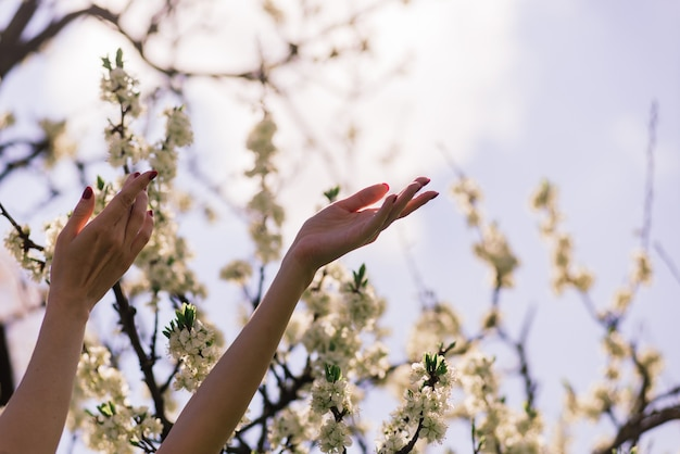Close up van mooie vrouwelijke handen met een tak van bloeiende fruitboom en bloemen. delicate lente achtergrond.