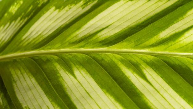 Close-up van natuurlijke plant bladsteel met textuur