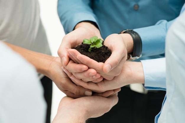 Close-up van ondernemers hand plant bij elkaar houden