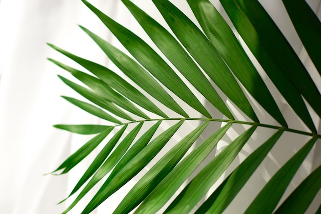Close-up van ondiepe diepte palmblad of tak op wit oppervlak met schaduw