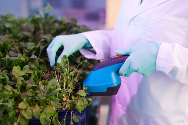 Close up van onherkenbaar werknemer beschermende kleding dragen zorg voor planten in kas, met behulp van elektrisch handgereedschap, kopie ruimte