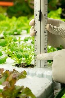 Close-up van onherkenbare teeltspecialist in handschoenen die plantzaailing meten met speciale liniaal in kas