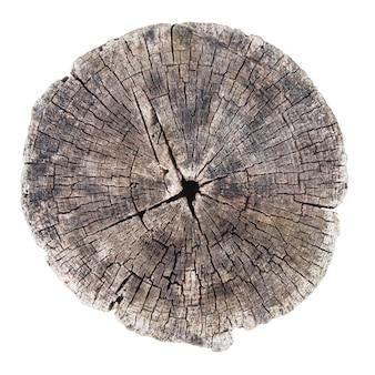 Close-up van oude boomstam geïsoleerd op een witte achtergrond. houtstructuur. concentrische ringen.