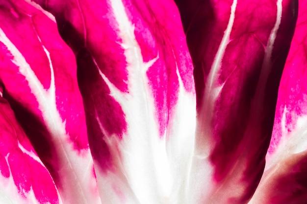 Close-up van paarse kool