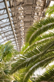 Close up van palmbladeren in zonnige dag in kas