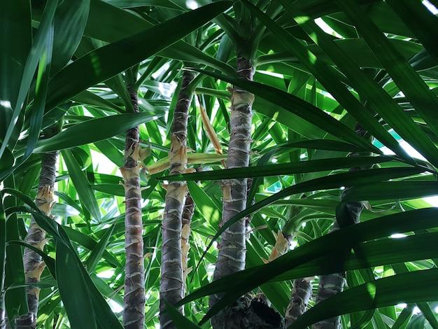 Close-up van palmboomstammen in de jungle. concept achtergrond, dieren in het wild, natuur, landschap.