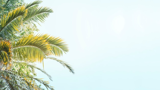 Close-up van palmen tegen blauwe hemel