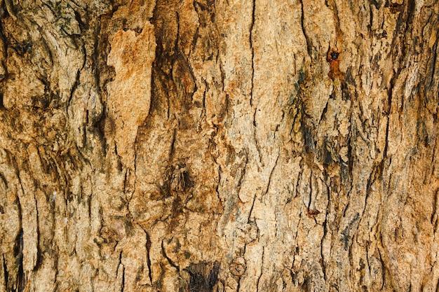 Close-up van patroon van scheuren op boomstammen.